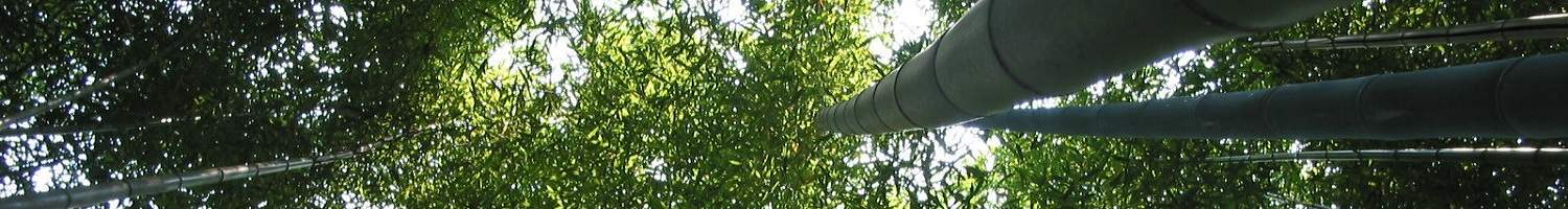 Bamboo-Forest-2 Subscribe