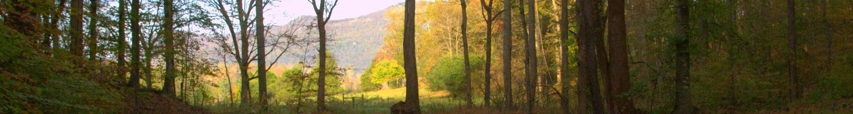 Trail-White-Oak-Creek-6-1500x201 Contact Jackie Woods