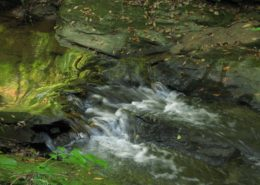 Trail-White-Oak-Creek-3-e1502303569593-260x185 The Heart's Journey by Jackie Woods