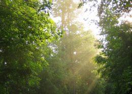 CEU-DefiningOnline-260x185 The Heart's Journey by Jackie Woods