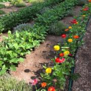 Adawehi Garden